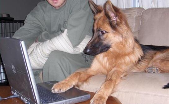 funny-dog-pictures-vista-crashed