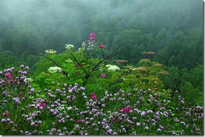Spring Rain Flowers